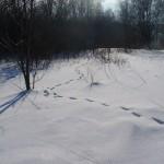 zima-Majka (3)