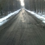 w-lesie