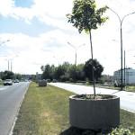 Mobilne drzewa