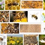 pszczoła-2JPG